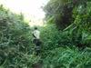 110807_jungle